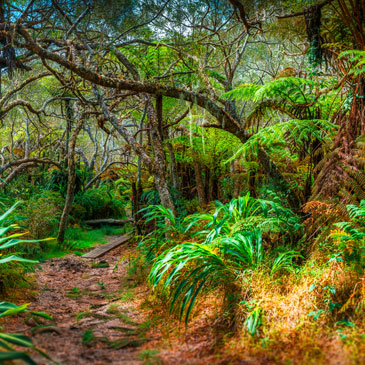 La Forêt Botanique